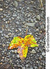 Fall leaf - Yellow fall leaf on a forest floor