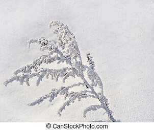 Winter background with hoarfrost on the grass - Hoarfrost,...