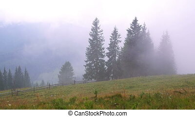 Mountain Forest Fog - Misty Mountain Forest Fog Blowing over...