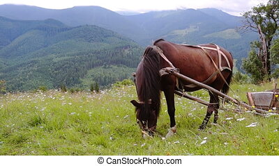 Harnessed Horse Grazing in a Meadow in the Mountains.