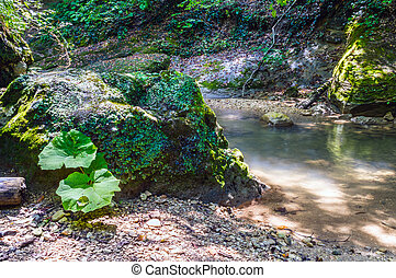 Mountain river on the rocks - The beautiful clear water of...