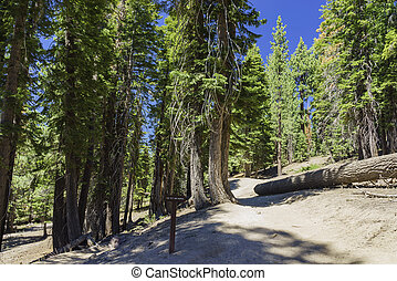 The Pacific Crest Trail - The famous Pacific Crest Trail...