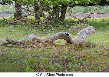 Storm damaged dead log - A photo of a log fallen and without...