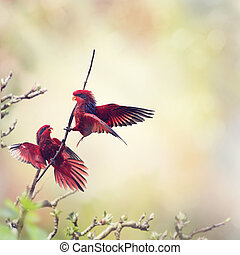 Blue-streaked Lory Eos reticulata - Two Blue-streaked Lory...