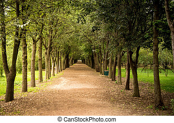 Tree lined path in a park in Mexico City One point...