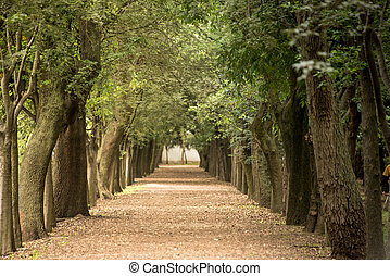 Tree lined path in park