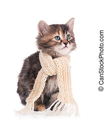 Sick siberian kitten with a scarf tied round a neck isolated...