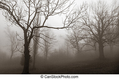 Treen in fog - Tree in fog
