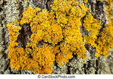 Mushroom on the tree - Yellow mushroom on the tree