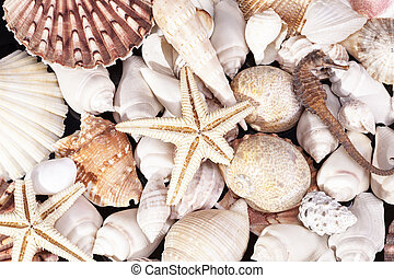 Background of various kind sea shells, starfish and seahorse...