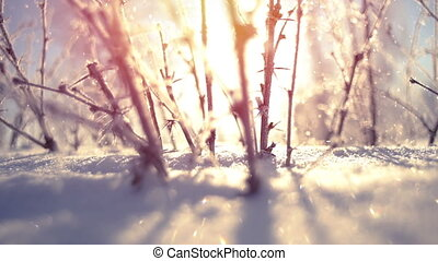 Frozen bush close-up during snowfall slowmotion - Frozen...