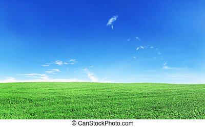 Green field under blue sky Beauty wallpaper
