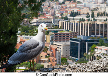 Albatross in Monte Carlo - Albatross with Monte Carlo...