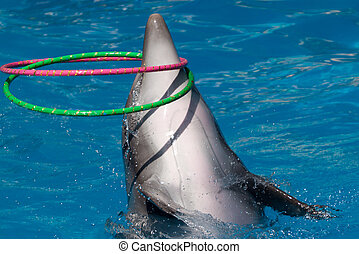 hoop - A dolphin with two hoops