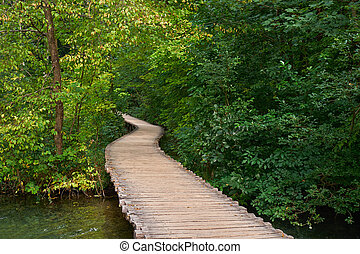 Forest Road Trail in Plitvice, Croatia - Deep Forest Road...