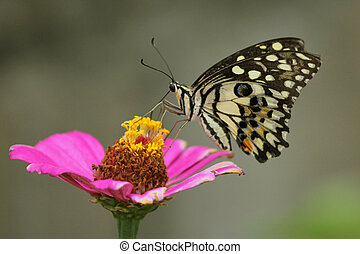 Beautiful butterfly perched on a flower