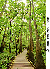 Trail in the forest - Bald cypresses in Congaree National...