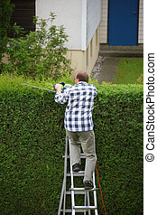 Man is cutting his hedges - Man cuts hedges in the garden