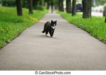 homeless black and white cat on asphalt, summertime