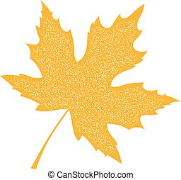 Yellow Maple Leaf with grange texture on a white background. Autumn maple leaf, a symbol