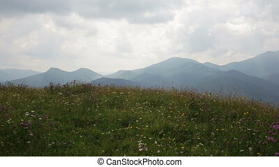 Happy couple on the flowers field into the mountains during...
