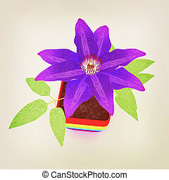 Clematis a beautiful flower in the colorful pot. 3D...