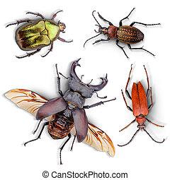 escarabajos, Colección