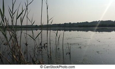 Morning scene at the lake, nature sounds - Morning scene at...