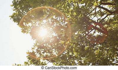 A beam of light through the foliage of a tree
