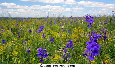 Meadow flowers under blue sky