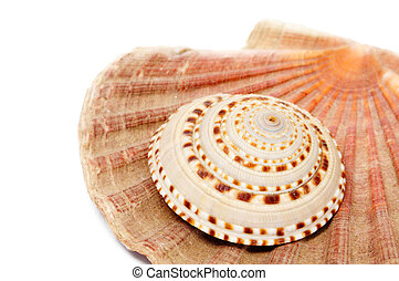 seashells - some seashells isolated on a white background