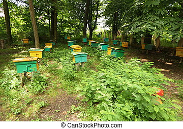 beegarden. a few beehives in a shadow of a threes. focus on...