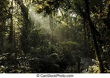 Bwindi Impenetrable Forest - Sunrays Breaking through the...