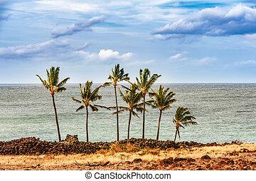 Palm Trees at the coast in Big Island of Hawaii