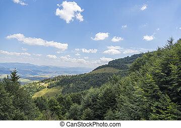 High mountain landscape. - Mountain landscape. Coniferous...