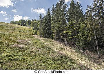 High mountain landscape - Mountain landscape Coniferous...