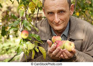 antigas, homem, maçãs, mãos, pomar