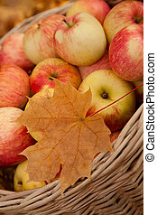 Wattled basket with apples among maple leaves