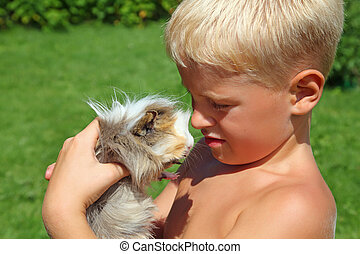 boy plays with Guinea pig on meadow