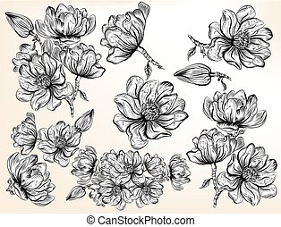 High detailed collection of hand drawn magnolia flowers in...