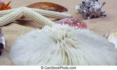 Starfish and Seashells on Sand
