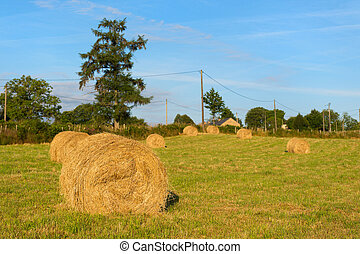 Hay roll in France - Hay roll on a hill in France