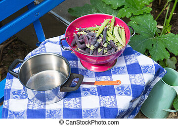 Marrowfat and peas in vegetable garden - Marrow fat and...