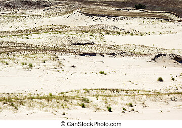 Curonian Spit - Dunes on the Curonian Spit near Nida,...