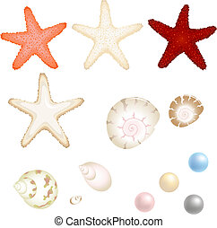 Vector Sea Set From Starfishes, Cockleshells And Pearls,...