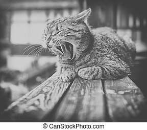 adorable meowing cat outdoors on wood.black and white