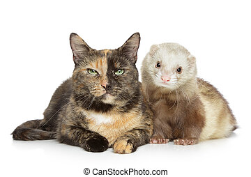 Cat and Ferret on white background