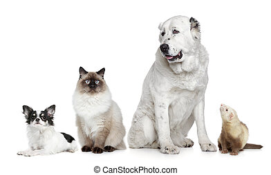 Group of dogs, cat and ferret