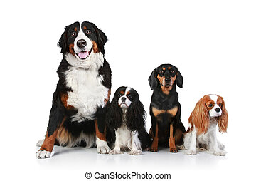 Dog group on white background