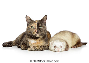 Cat and ferret on a white background